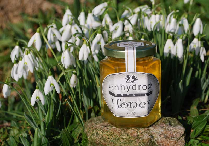 lanhydrock-estaet-honey-and-snowdrops