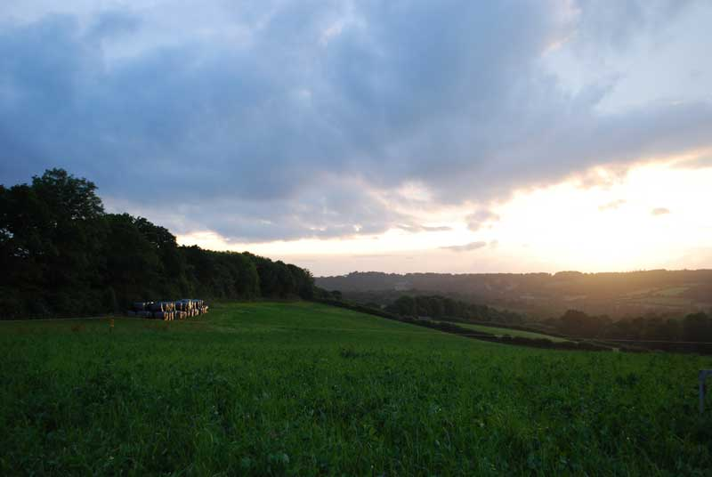 lanhydrock-pasture-evening
