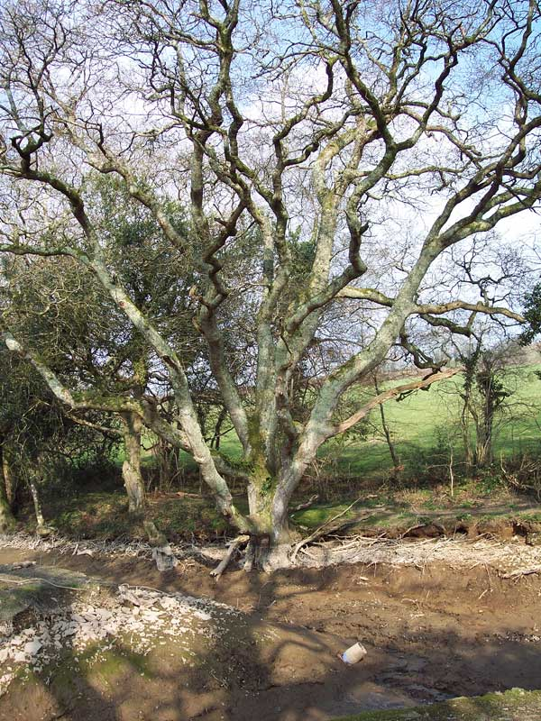 oak-pond-before