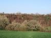 ford-plantation-2012